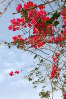 Flower Background2 by Armathor-Stock