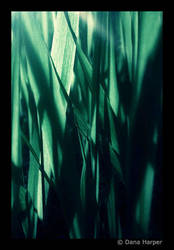 Abstract Grass by chaoticparadox