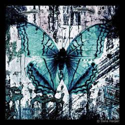 Butterfly Texture by chaoticparadox