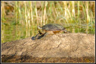 Turtle2 by xedgerx