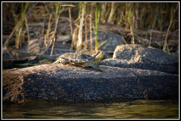 Turtle3 by xedgerx