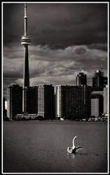 Toronto Swan by xedgerx