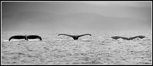 Tale of a Whale by xedgerx