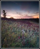 Sunrise with fall shrubs by xedgerx