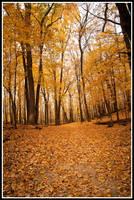 Fall Forrest 2010 by xedgerx