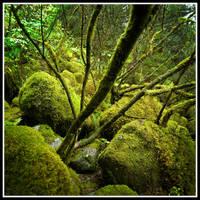 Mossy Rocks by xedgerx