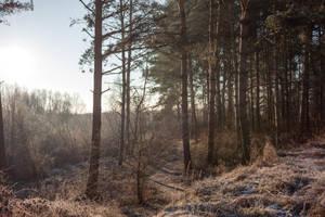 Winterscape 4 by ManicHysteriaStock