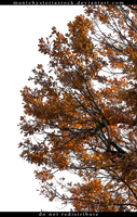 Oak Tree Foliage Autumn Cut Out Stock by ManicHysteriaStock