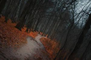 Autumn Forest 2 by ManicHysteriaStock