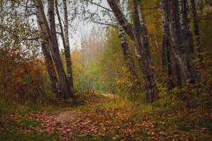 Autumn Forest 3 by ManicHysteriaStock