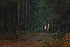 Autumn Forest Path by ManicHysteriaStock