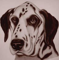 DOG NATION by sinsenor