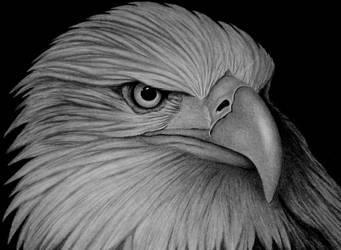AMERICAN EAGLE by sinsenor