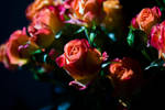 Roses love by Arichy