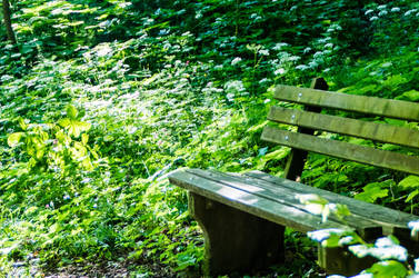 Park bench in forest by Surfinger