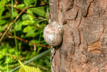 Snail on a tree by Surfinger