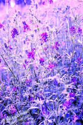 Blumen sind das Laecheln der Erde. by Alexandraawr