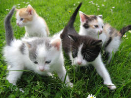 Little cats by Nipol