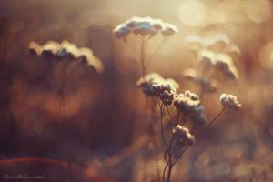Iced Bloom by RaphaelleM
