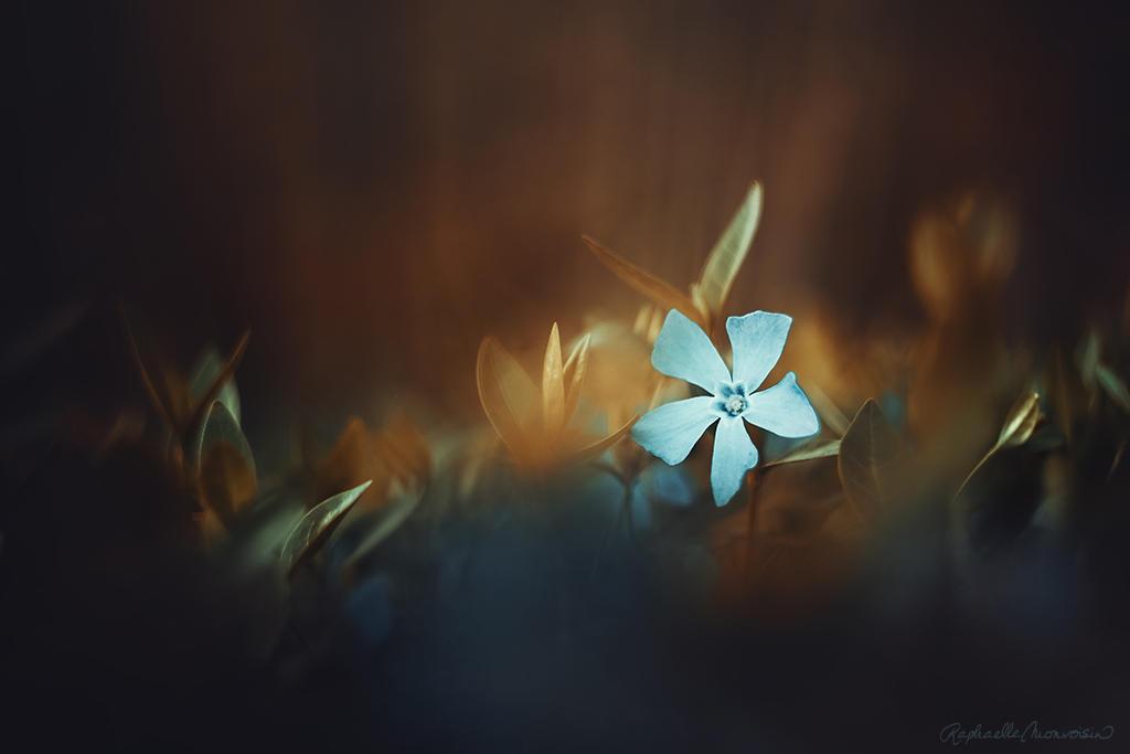 Perwinke by RaphaelleM