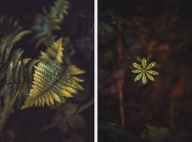 Fern and Star by RaphaelleM