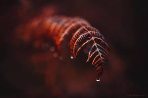 Scarlet Fern by RaphaelleM