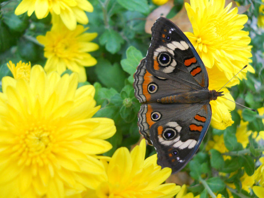 Butterfly on a Yellow Flower by Chlodulfa