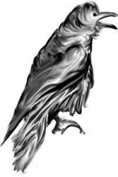 raven sketch by nizo