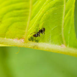Ant by Unsu