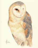 Watercolor Barn Owl Feliz by aryalynx