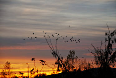 the flight of birds by Sicmoid