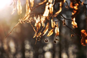 Winter sun by Sicmoid