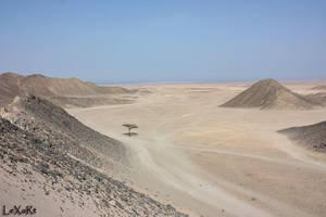 Tree in Desert I by LexartPhotos