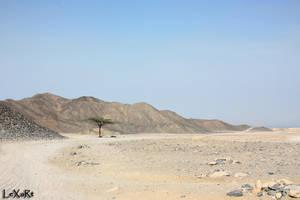 Tree in Desert II by LexartPhotos