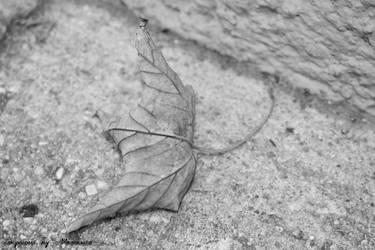 lonley leaf... by LexartPhotos