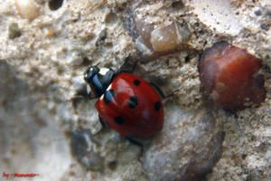 Ladybird one by LexartPhotos