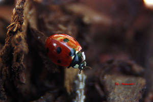 Ladybird three by LexartPhotos