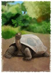 Galapagos Tortoise by wendystolyarov