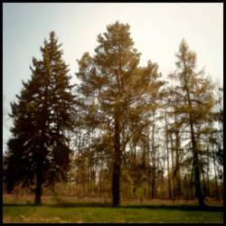 2013-127 Three by pearwood