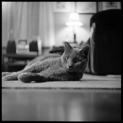 RIP Boris by pearwood