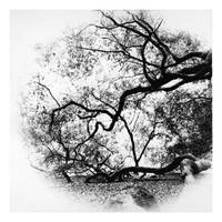 2015-254 Angel Oak, expired paper and a short lens by pearwood