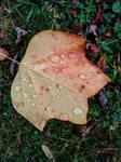 raindrops and leaf by Mittelfranke