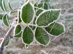 frost by Mittelfranke