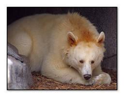 Black Bear - White Phase by Digitaldedon