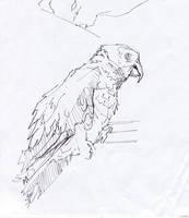 Drawing perrots by soiseiseke