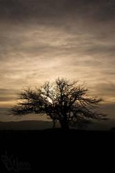 Tree, sun, clouds by nongOui