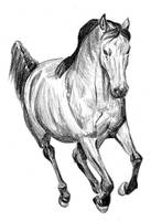 horse by Enkida