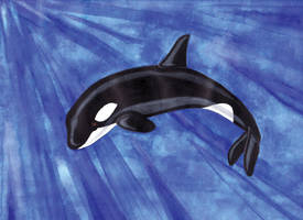 Orca by Lunatron