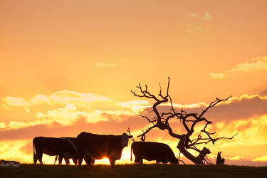 MOOOVE OVER by VFrance