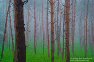Mystic forest by ChristopheCarlier